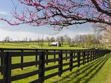 Redbud Trees in Full Bloom, Lexington, Kentucky, Usa Photographic Print by Adam Jones