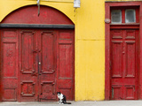 Cat and Colorful Doorways, Valparaiso, Chile Photographic Print by Scott T. Smith