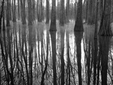 Reflections Cool Morning Mist, Inside a Floodplain Forest, Florida Caverns State Park, Florida, Usa Photographic Print by Maresa Pryor