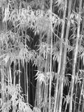 Japanese Tea Garden, San Francisco, California, Usa Photographic Print by Connie Bransilver