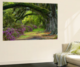 Coast Live Oaks and Azaleas Blossom, Magnolia Plantation, Charleston, South Carolina, Usa Premium Wall Mural by Adam Jones
