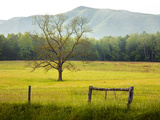 Single Tree at Sunrise, Cades Cove, Great Smoky Mountains National Park, Tennessee, Usa Photographic Print by Adam Jones