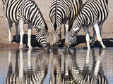 Zebras Reflected in a Water Hole, Etosha National Park, Namibia, Africa Photographic Print by Wendy Kaveney