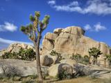 Granite Rock Formation and Joshua Tree, Joshua Tree National Park, California, Usa Photographic Print by Jamie & Judy Wild