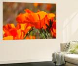 Poppies, Antelope Valley Near Lancaster, California, Usa Wandgemälde von Jamie & Judy Wild