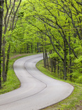 Curvy Roadway under Spring Green Canopy at Brown County State Park in Indiana, Usa Photographic Print by Chuck Haney