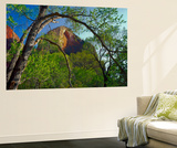Cottonwoods and Red Arch Mountain in Early Spring, Zion National Park, Utah, Usa Wall Mural by Scott T. Smith