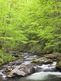 Mountain Stream, Great Smoky Mountains National Park, North Carolina, Usa Photographic Print by Adam Jones