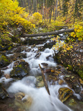 Hellroaring Creek Decked Out in Autumn Color Near Whitefish, Montana, Usa Photographic Print by Chuck Haney