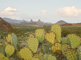 Mule Ears and Prickly Pear Cactus, Chisos Mountains, Big Bend National Park, Brewster Co., Texas, U Photographic Print by Larry Ditto