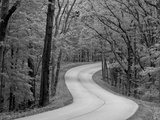 Curvy Roadway under Spring Green Canopy at Brown County State Park in Indiana, Usa Stampa fotografica di Chuck Haney