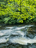 Dingman's Creek Flows Through Forest, Dingman's Ferry, Pennsylvania, Usa Photographic Print by Jay O'brien
