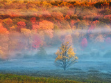 Mist and Forest in Autumn Color, Davis, West Virginia, Usa Photographic Print by Jay O'brien