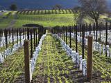 Santa Barbara Wine Country, Santa Ynez, Southern California, California, Usa Photographic Print by Walter Bibikow