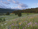 Wildflowers and Mountain Range, Spanish Creek, Gallatin National Forest, Bozeman, Montana, Usa Stampa fotografica di Chuck Haney