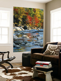 River Flowing Through Forest in Autumn, North Fork, Potomac State Forest, Maryland, Usa Mural por Adam Jones