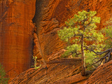 Zion National Park, Utah, Usa Photographic Print by Maresa Pryor