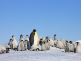 Emperor Penguin (Aptenodytes Forsteri) Parent with Chick on Ice, Snow Hill Island, Antarctica Photographic Print by Keren Su
