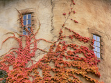 Detail of Round Tower and Virginia Creeper, La Caille at Quail Run, Salt Lake Valley, Utah, Usa Photographic Print by Scott T. Smith