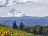 Mt. Hood from Mccall Point, Tom Mccall Nature Preserve, Columbia Gorge, Oregon, Usa Photographic Print by Rick A. Brown
