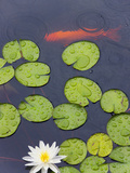 Flower and Gold Fish in Lily Pond in the Chinese Garden, Suzhou, Jiangsu Province, China Photographic Print by Keren Su