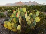 Chisos Mountains and Prickly Pear Cactus, Big Bend National Park, Brewster Co., Texas, Usa Photographic Print by Larry Ditto