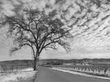 Vineyards in Winter, Napa, Napa Valley Wine Country, Northern California, Usa Photographic Print by Walter Bibikow