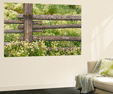 Wild Chamomile Wall Mural by Adam Jones