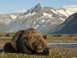 Grizzly Bear Resting on Tidal Flats Along Kukak Bay, Katmai National Park, Alaska, Usa Photographic Print by Paul Souders