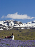 Scenic Landscape of Lupine and Church with Snow-Covered Mountains, Snaefellsnes Peninsula, Iceland Photographic Print by Joan Loeken