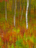 Abstract of Autumn Forest Scene, New York, Usa Photographic Print by Jay O'brien