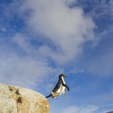 Adelie Penguin Jumping across Deep Ravine Against Blue Sky and Clouds Photographic Print by John Eastcott & Yva Momatiuk