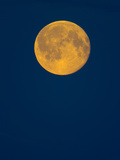 Rising Big Full Moon in a Dark Blue Sky in Autumn Photographic Print by John Eastcott & Yva Momatiuk