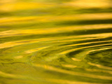 Green and Golden Reflections in Pond with Ripples Created by Animals Photographic Print by John Eastcott &amp; Yva Momatiuk