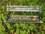 A Lichen-Covered Garden Bench Surrounded by Ferns Photographic Print by John Eastcott & Yva Momatiuk