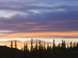 Black Spruce Trees Against Colorful Evening Sky in Autumn at Sunset Photographic Print by John Eastcott &amp; Yva Momatiuk