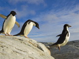 Adelie Penguins on Coastal Rocks, Jumping across a Deep Ravine Photographic Print by John Eastcott & Yva Momatiuk