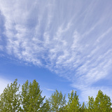 Altocumulus Clouds in a Blue Sky over Green Aspen Trees Canopies Photographic Print by John Eastcott & Yva Momatiuk