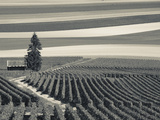 France, Marne, Champagne Region, Mont Aime, Elevated View of Vineyards and Fields Lámina fotográfica por Walter Bibikow