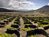 Traditional Vineyards in La Geria Where the Wines are Produced in a Volcanic Ash Soil, Lanzarote, C Photographic Print by Mauricio Abreu