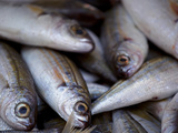 Sicily, Italy, Western Europe, Fish for Sale at the Market Photographic Print by Ken Scicluna