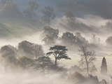 Trees in Early Morning Mist, Cotswolds, England Fotografie-Druck von Peter Adams