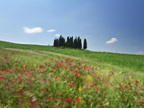 Italy, Tuscany, Siena District, Orcia Valley, Cypress on the Hill Near San Quirico D'Orcia Photographic Print by Francesco Iacobelli