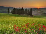 Italy, Tuscany, Siena District, Orcia Valley, Cypress on the Hill Near San Quirico D'Orcia Fotografie-Druck von Francesco Iacobelli
