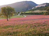 Italy, Umbria, Campi, a Field of Sainfoin Outside the Small and Ancient Village of Campi, Near Norc Photographic Print by Katie Garrod