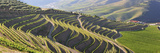 Terraced Vineyards in the Douro Region, a UNESCO World Heritage Site. Portugal Photographic Print by Mauricio Abreu