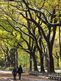 Gavin Hellier - The Mall and Literary Walk with American Elm Trees Forming the Avenue Canopy, New York, USA Fotografická reprodukce