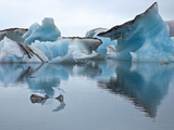 Large Blocks of Ice Floating on Jokulsarlon Lagoon, Blocks Break Off from the 30-Metres-High Edge o Photographic Print by Nigel Pavitt
