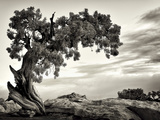 USA, Utah, Dead Horse State Park, Juniper Tree Photographic Print by Mark Sykes