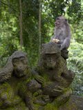 Bali, Ubud, a Macaque Sitting on a Stone Carving of a Macaque Fotodruck von Niels Van Gijn